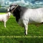 Hukum Berkurban Idul Adha