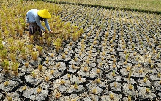 kekeringan melanda beberapa titik di Indonesia